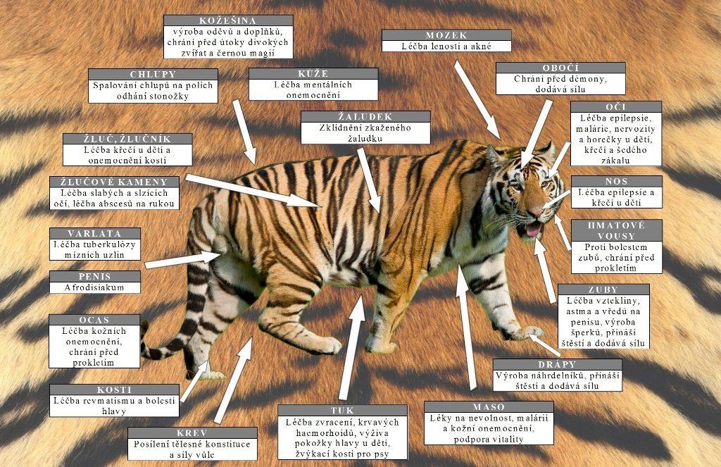 Tygr v čínské medicíně