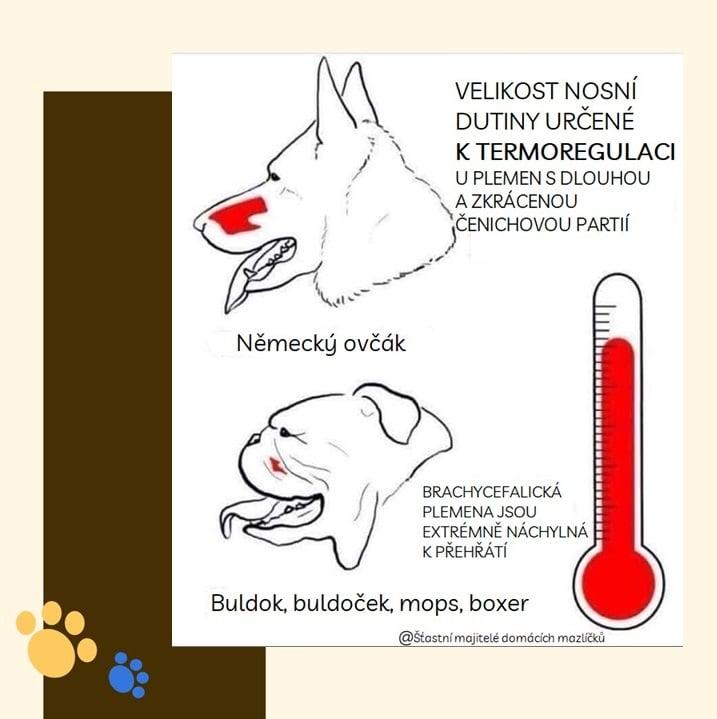 Dýchání psů při šlechtění