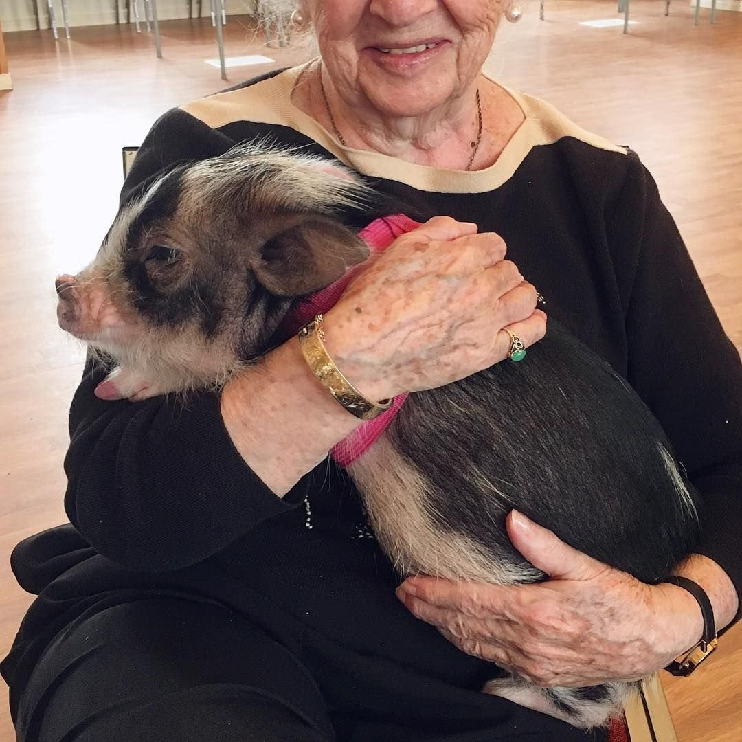 Zooterapie se starými lidmi